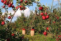Analisis agua mayoristas de frutas y hortalizas